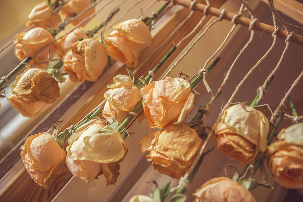 Orange Rose Photograph - Drying Roses by Thubakabra