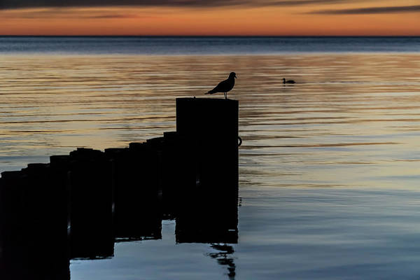 Photograph - Dual Birds At Sun Rise  by Sven Brogren