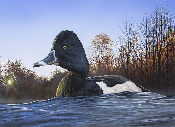 Painting - Ring-necked Duck by Anthony J Padgett