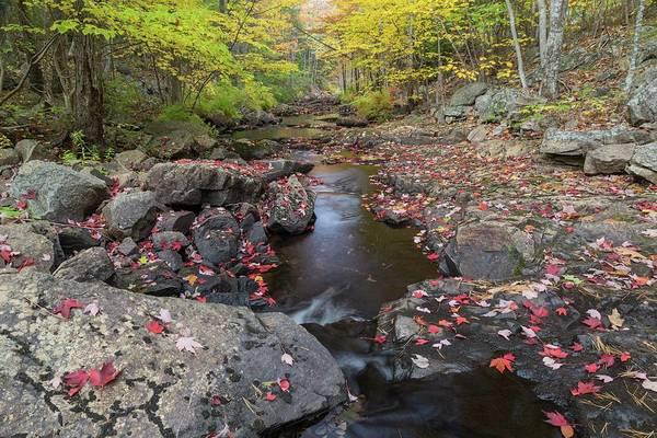 Photograph - Duck Brook Stream by Paul Schultz