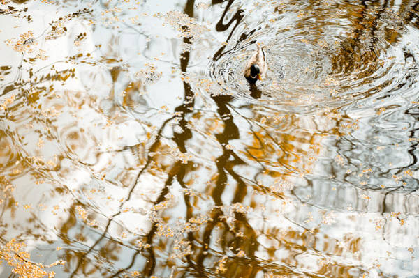 Wall Art - Photograph - Duck Float In Water Reflections by Arletta Cwalina
