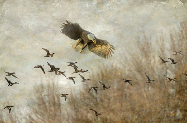 Wall Art - Photograph - Duck Hunting Eagle Style by Angie Vogel