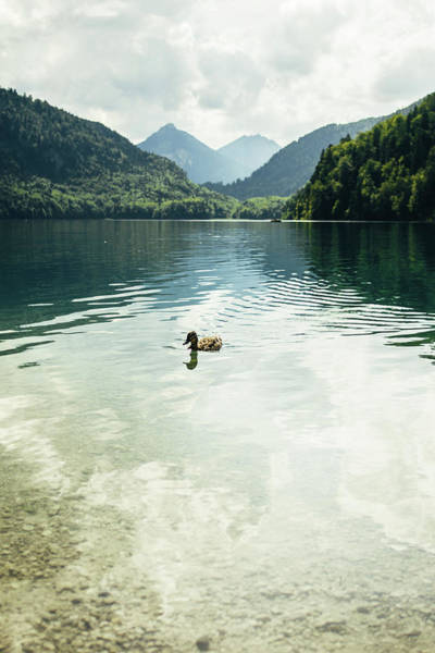 Wall Art - Photograph - Duck In Mountain Lake by Pati Photography