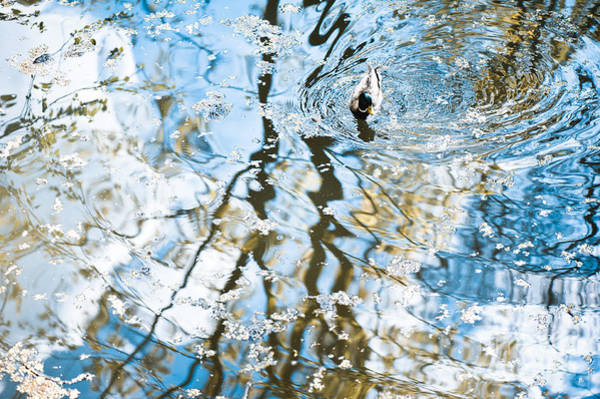 Wall Art - Photograph - Duck In Water Reflections Abstract by Arletta Cwalina