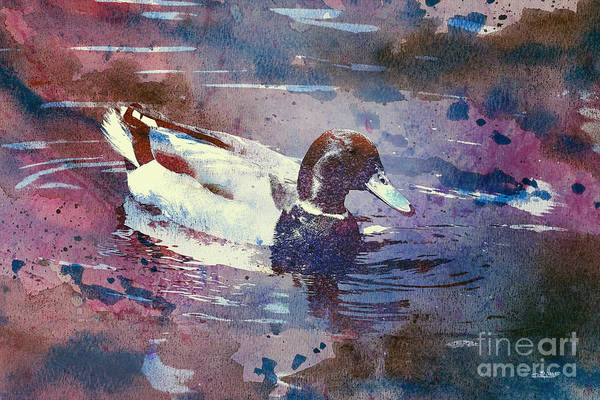Digital Art - Duck by Jutta Maria Pusl