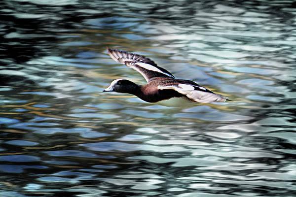 Digital Art - Duck Leader by Brad Thornton