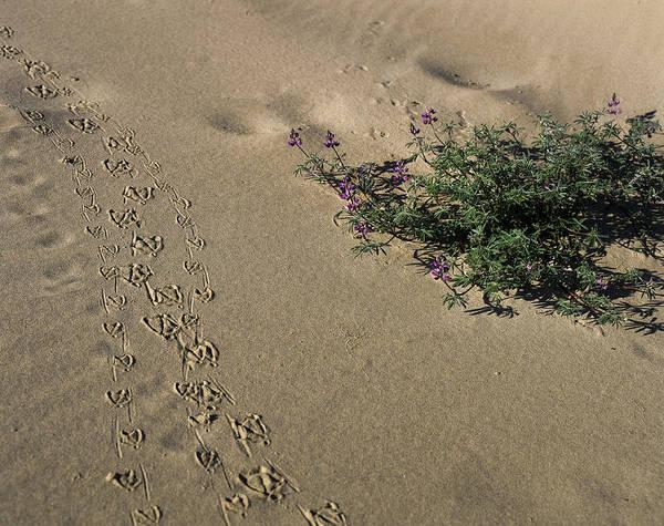 Photograph - Duck Tracks by Robert Potts
