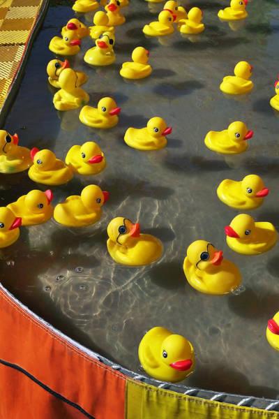 Photograph - Duckies by Skip Hunt