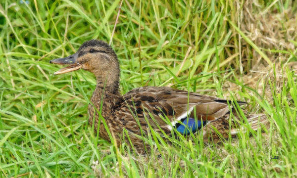 Painting - Duckling-brd822846 by Dean Wittle