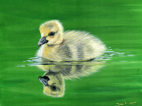 Painting - Duckling by John Neeve