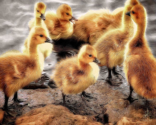 Digital Art - Ducklings by Pennie McCracken