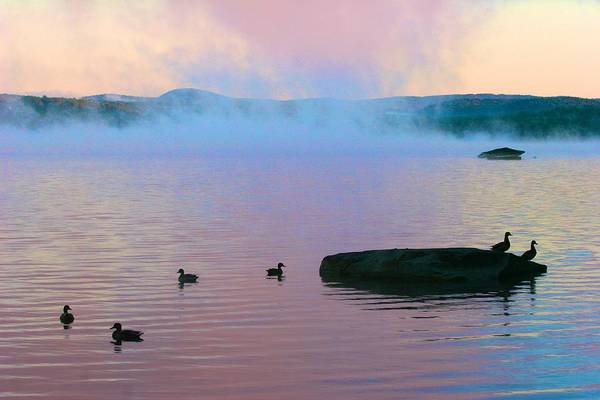 Photograph - Ducks At Dawn by Polly Castor