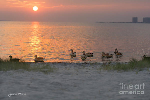 Photograph - Ducks At Sunrise by James Hennis