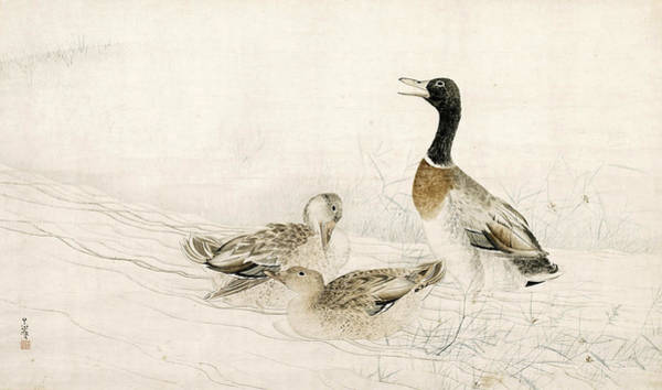 Wall Art - Drawing - Ducks At The Water's Edge by Matsumura Goshun