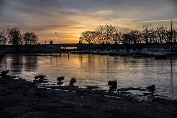 Photograph - Ducks Bathing At Sunrise  by Sven Brogren