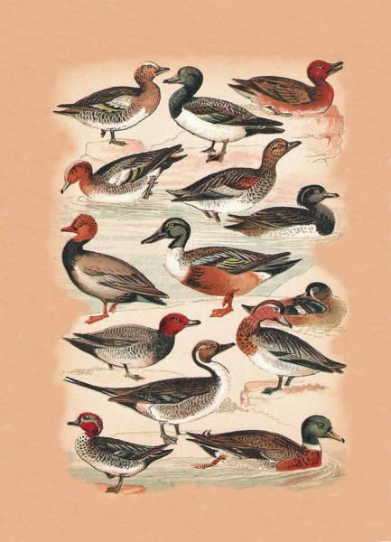 Mixed Media - Ducks by Eric Kempson
