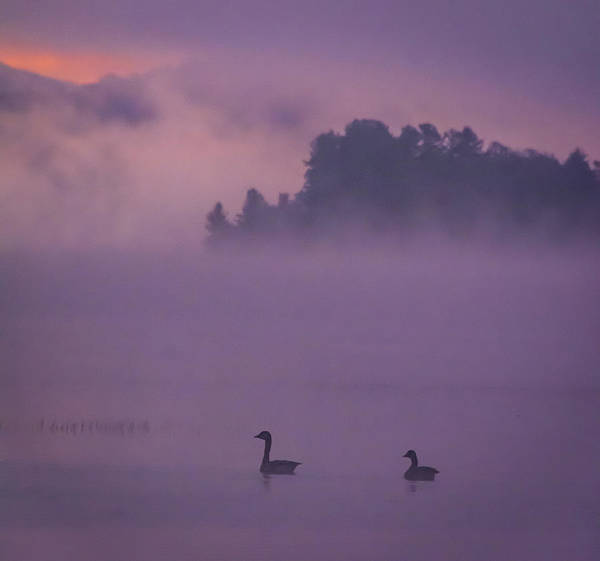 Photograph - Ducks Going About by Francisco Gomez