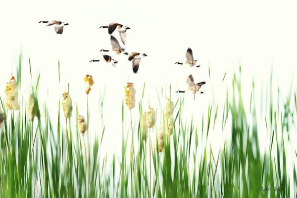 Photograph - Ducks In Flight - Migration  by Andrea Kollo