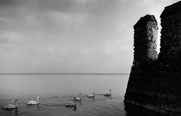Photograph - Ducks In Lake Garda, Italy by Alexandre Rotenberg