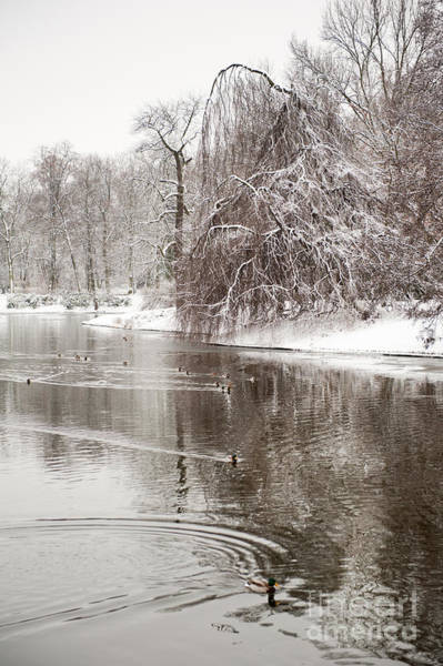 Wall Art - Photograph - Ducks In Pond In Winter by Arletta Cwalina