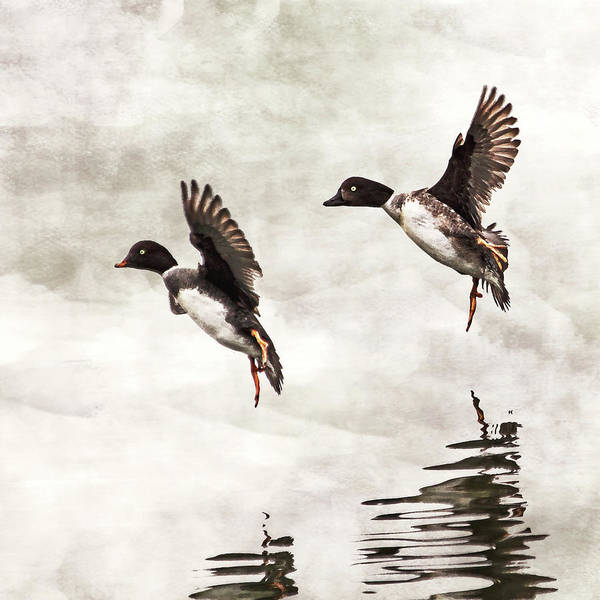 Photograph - Ducks Landing On The Lake by Peggy Collins