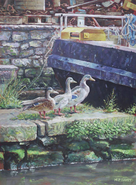 Wall Art - Painting - Ducks On Dockside by Martin Davey