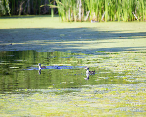 Photograph - Ducks On Pond by Donna L Munro