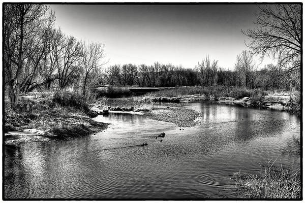 Photograph - Ducks On The South Platte River by David Patterson