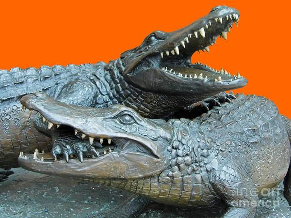 Photograph - Dueling Gators Transparent For Customization by D Hackett