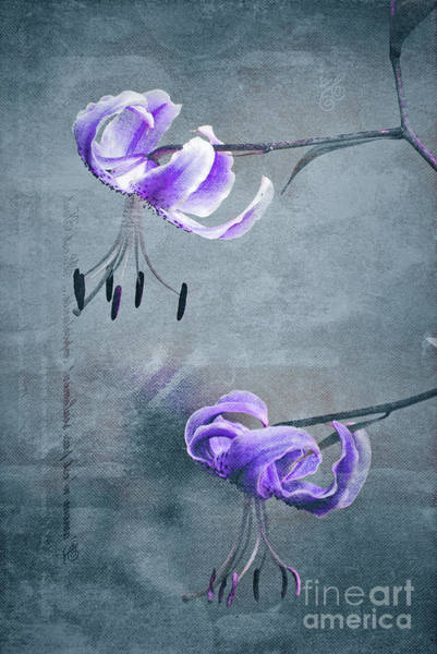 Wall Art - Photograph - Duet - 62 by Variance Collections
