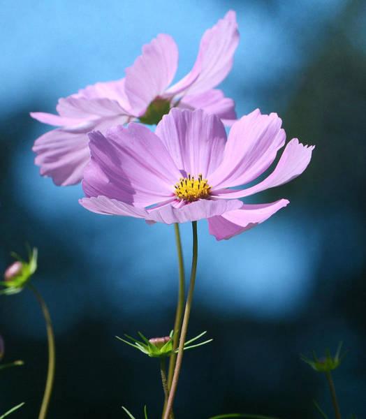 Photograph - Duet In Pink by Fraida Gutovich