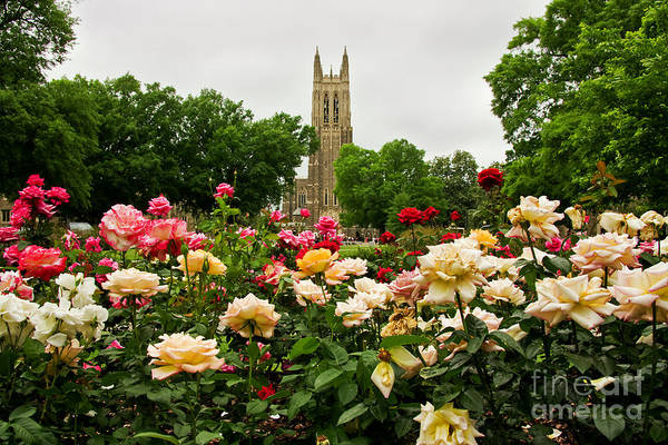 Duke Chapel And Roses Art Print