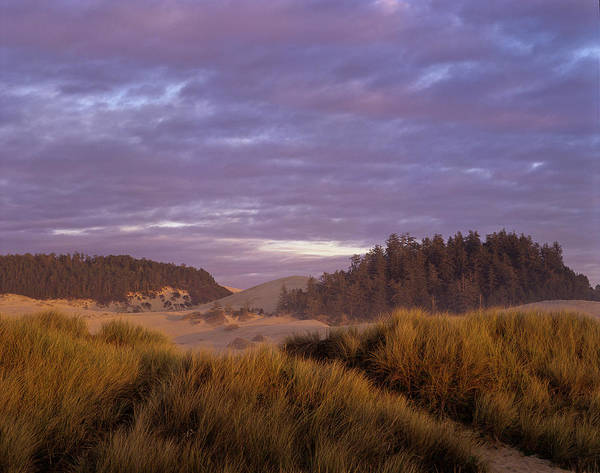 Photograph - Dune Afternoon by Robert Potts