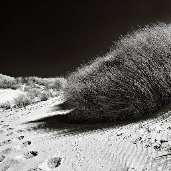 Footstep Wall Art - Photograph - Dune Grass by Dave Bowman