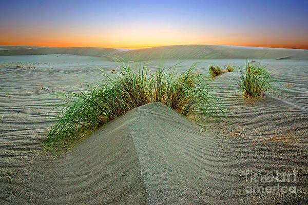 Photograph - Dune Grass Of Bruneau Idaho by Martin Konopacki