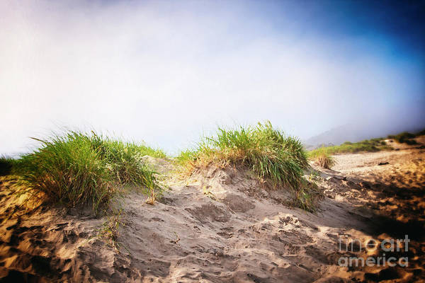 Photograph - Dune Grass On The Foggy Coast by Lincoln Rogers