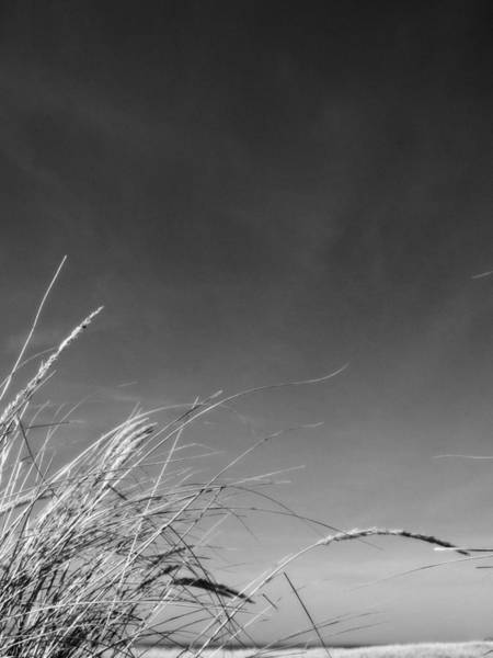 Photograph - Dune Grass With Sky by Michelle Calkins