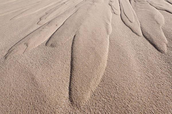 Photograph - Dune Patterns by Michael Blanchette