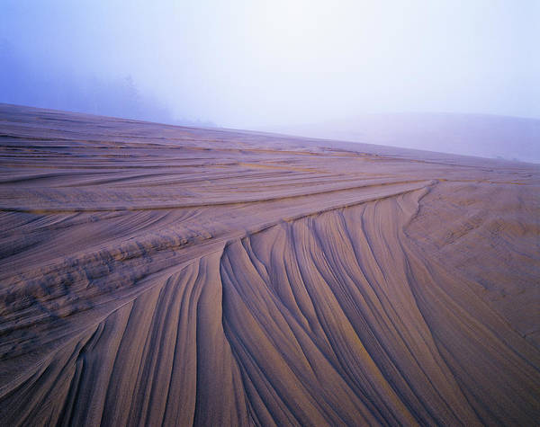 Photograph - Dune Patterns by Robert Potts