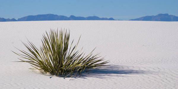 Dune Plant Art Print