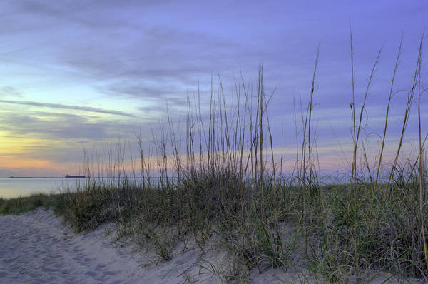 Photograph - Dune Walk V by Pete Federico