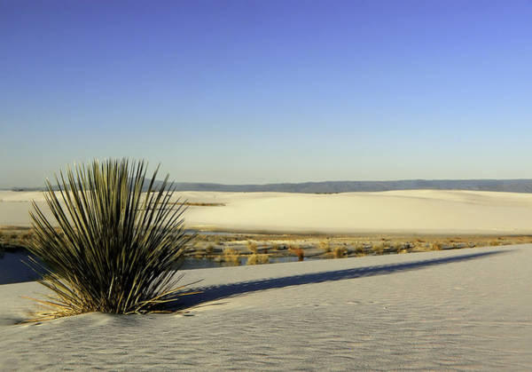 Wall Art - Photograph - Dunes And Yucca One by Paul Basile