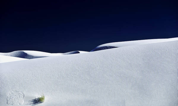 Wall Art - Photograph - Dunes And Yucca Three by Paul Basile