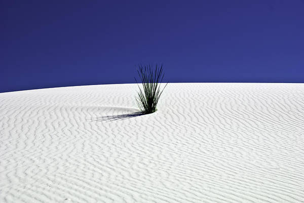 Wall Art - Photograph - Dunes And Yucca Two by Paul Basile