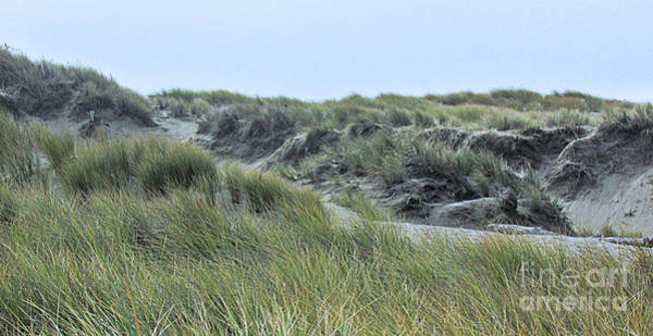 Photograph - Dunes At Bodega by Joyce Creswell