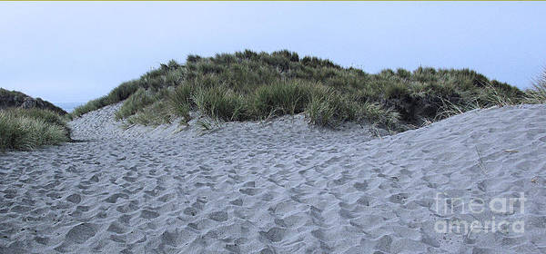 Photograph - Dunes by Joyce Creswell