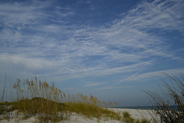 Grayton Beach Photograph - Dunes by Ronnie Wolf