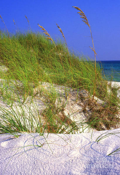 Photograph - Dunes Trail The Emerald Coast by Thomas R Fletcher
