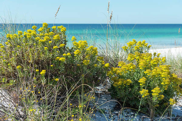 Dunetop Wildflowers By The Beach Art Print
