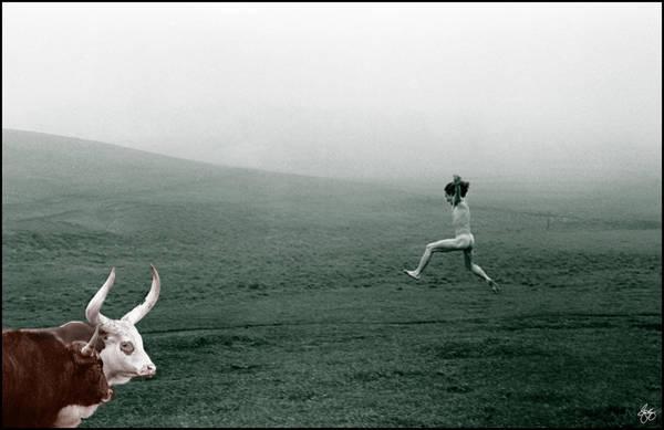 Photograph - Dunno Hes Got No Horns by Wayne King